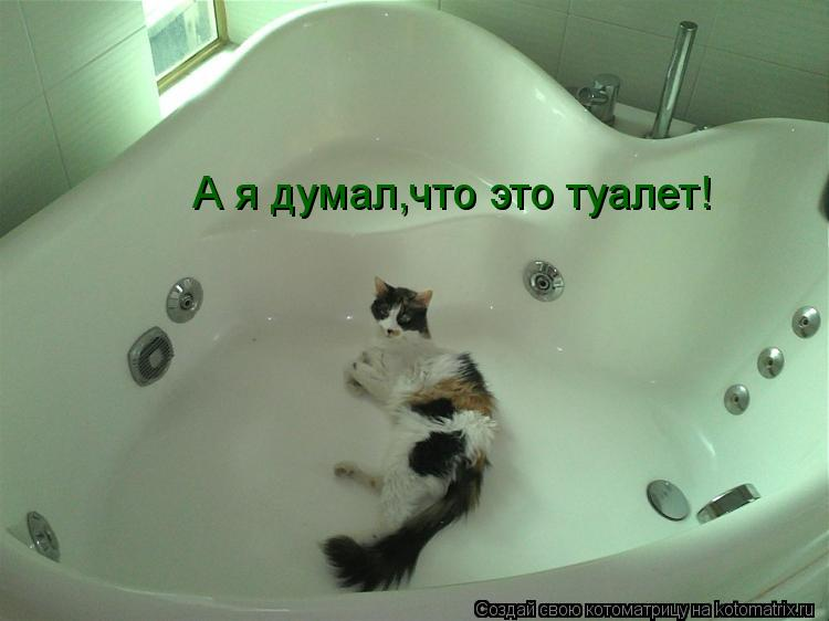 Котоматрица: А я думал,что это туалет!