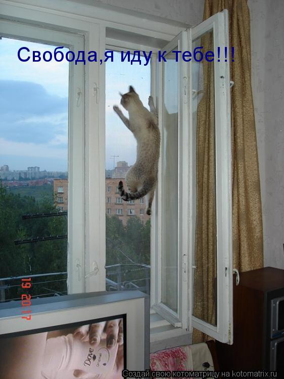 Котоматрица: Свобода,я иду к тебе!!!