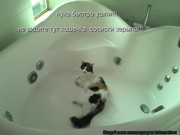 Котоматрица: нука быстро ушли!!! не видите тут кошечка  сосиски зарыла!!!