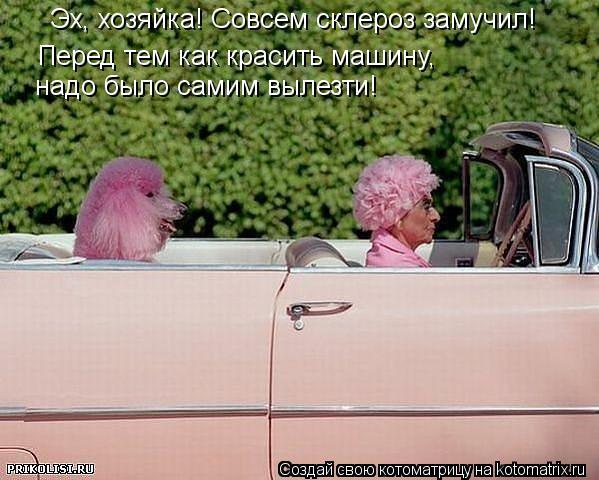 Котоматрица: Эх, хозяйка! Совсем склероз замучил! Перед тем как красить машину,  надо было самим вылезти!