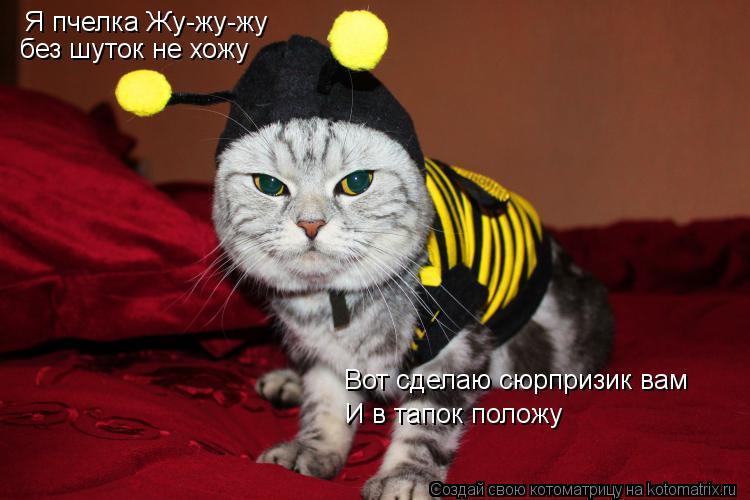 Котоматрица: Я пчелка Жу-жу-жу без шуток не хожу Вот сделаю сюрпризик вам И в тапок положу
