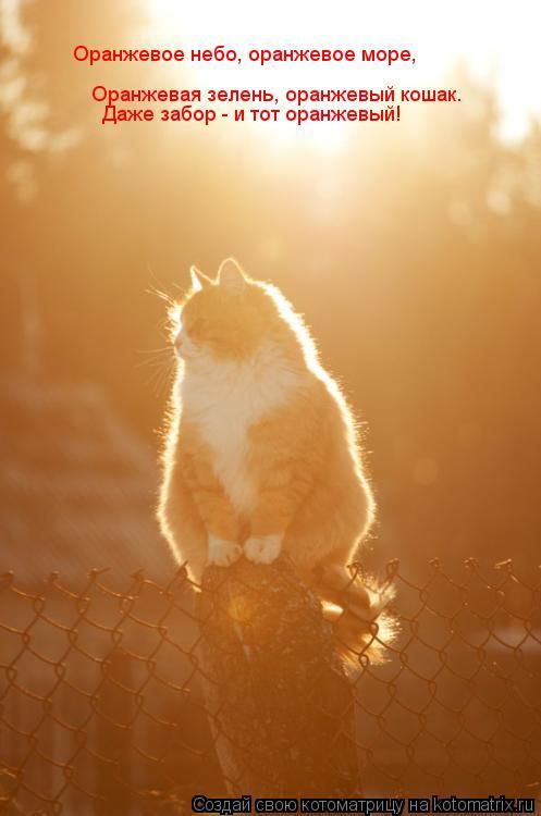 Котоматрица: Оранжевое небо, оранжевое море, Оранжевая зелень, оранжевый кошак. Даже забор - и тот оранжевый!
