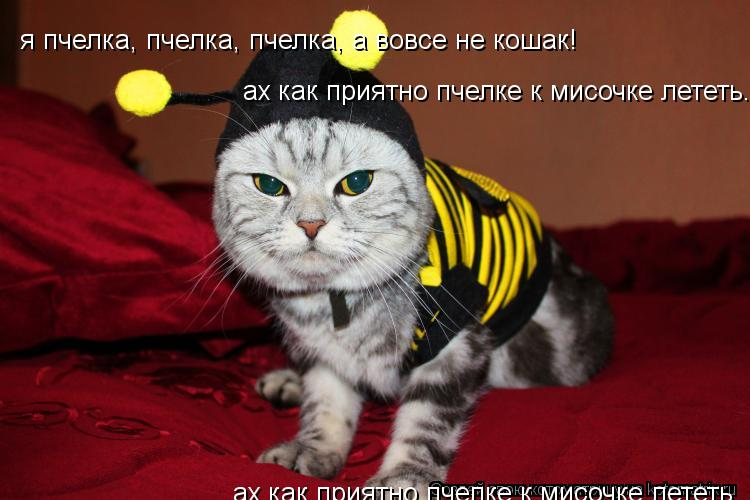 Котоматрица: я пчелка, пчелка, пчелка, а вовсе не кошак! ах как приятно пчелке к мисочке лететь... я пчелка, пчелка, пчелка, а вовсе не кошак! ах как приятно п