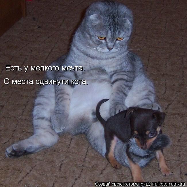 Котоматрица: Есть у мелкого мечта: С места сдвинути кота.