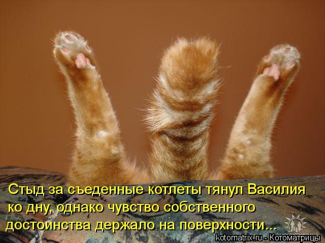 http://kotomatrix.ru/images/lolz/2012/02/29/1124905.jpg