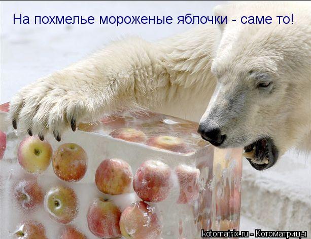 Котоматрица: На похмелье мороженые яблочки - саме то!