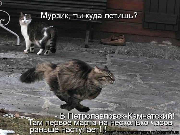 Котоматрица - - Мурзик, ты куда летишь? - В Петропавловск-Камчатский! Там первое мар