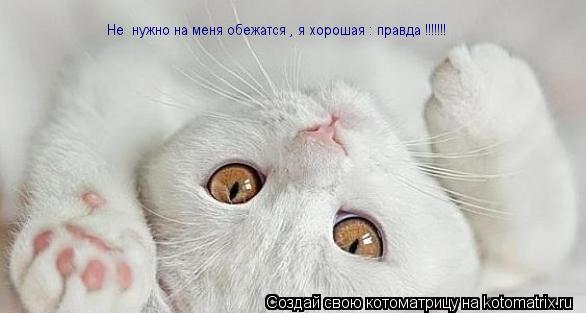 Котоматрица: Не  нужно на меня обежатся , я хорошая : правда !!!!!!!