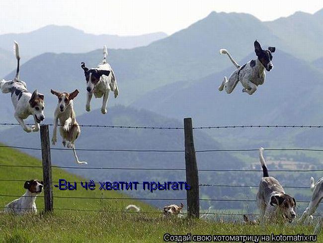 Котоматрица: -Вы чё хватит прыгать -Вы чё хватит прыгать