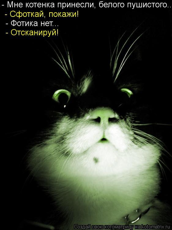 Котоматрица: - Мне котенка принесли, белого пушистого...  - Сфоткай, покажи!   - Фотика нет...  - Отсканируй!