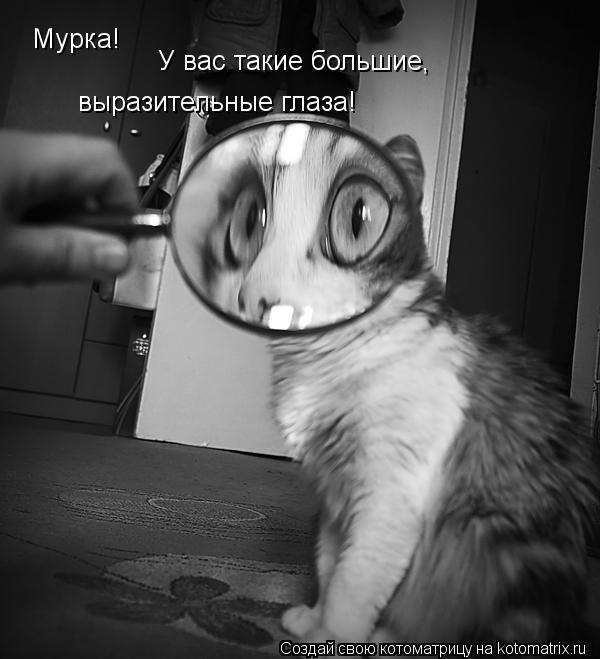 Котоматрица: Мурка! У вас такие большие, выразительные глаза!