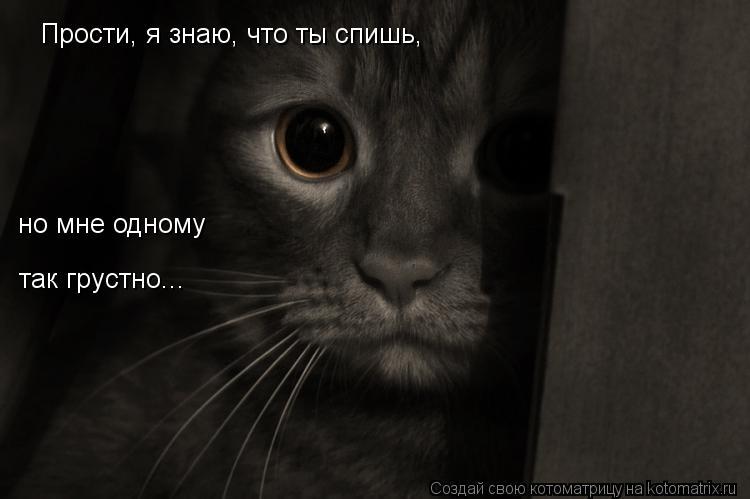 Котоматрица: Прости, я знаю, что ты спишь, но мне одному так грустно...