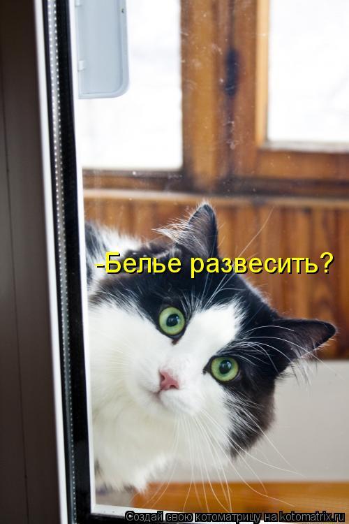 Котоматрица: -Белье развесить?