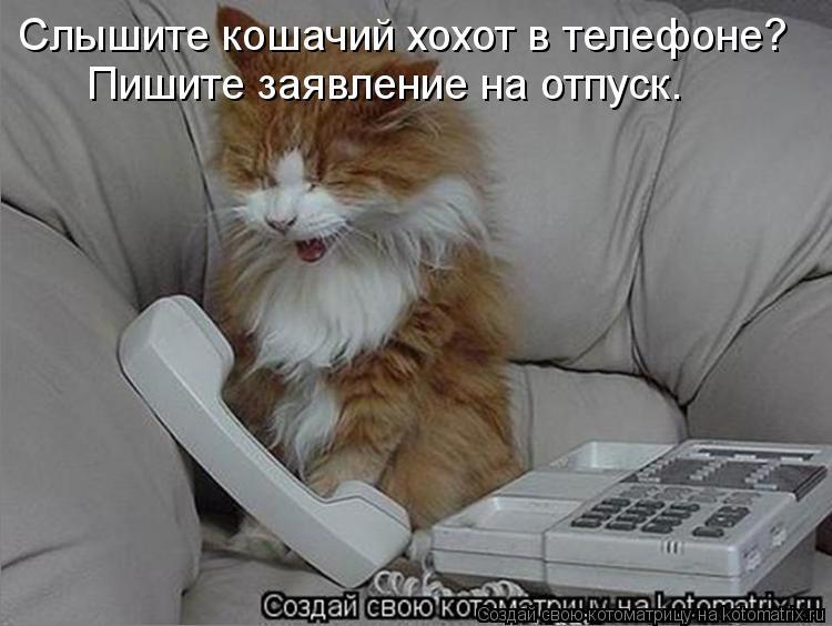 Котоматрица: Слышите кошачий хохот в телефоне? Пишите заявление на отпуск.