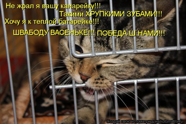 Котоматрица: Не жрал я вашу канарейку!!! Такими ХРУПКИМИ ЗУБАМИ!!! Хочу я к теплой батарейке!!! ШВАБОДУ ВАСЕНЬКЕ!!! ПОБЕДА Ш НАМИ!!!