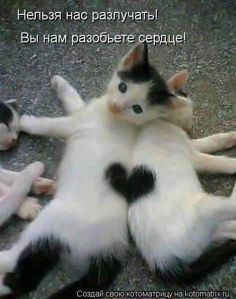 Котоматрица: Нельзя нас разлучать! Вы нам разобьете сердце!