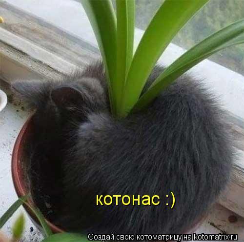 Котоматрица: котонас :)