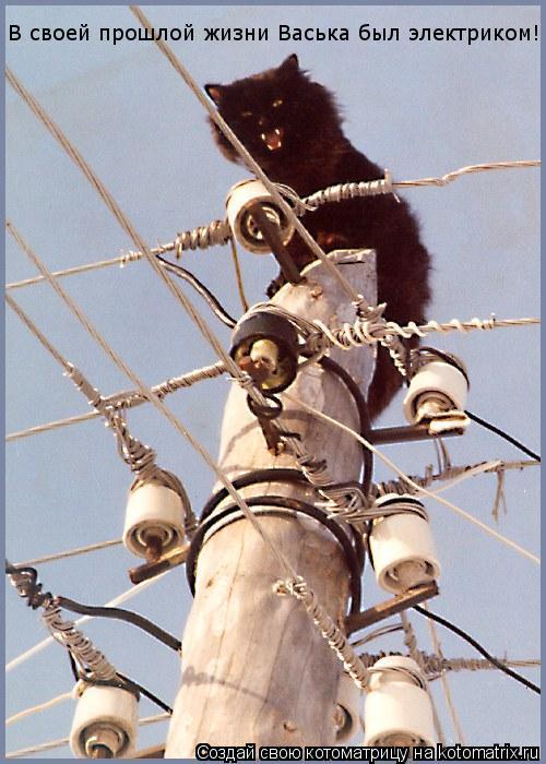 Котоматрица: В своей прошлой жизни Васька был электриком!
