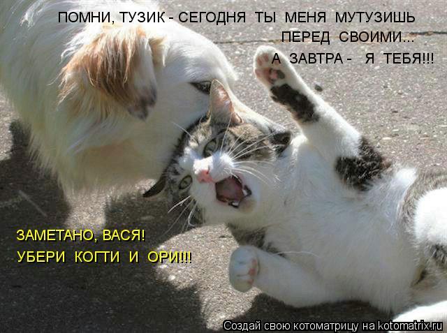 Котоматрица: ПЕРЕД  СВОИМИ...  А  ЗАВТРА -   Я  ТЕБЯ!!! ЗАМЕТАНО, ВАСЯ! УБЕРИ  КОГТИ  И  ОРИ!!! ПОМНИ, ТУЗИК - СЕГОДНЯ  ТЫ  МЕНЯ  МУТУЗИШЬ