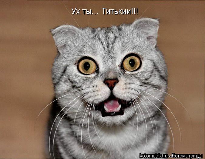 Котоматрица: Ух ты... Титькии!!!