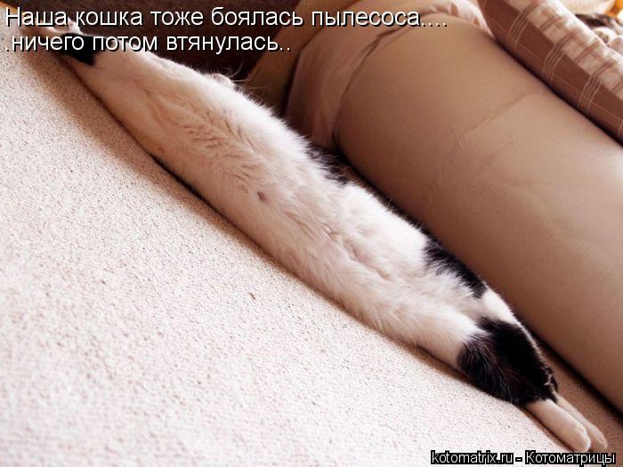 Котоматрица: Наша кошка тоже боялась пылесоса.... .ничего потом втянулась..