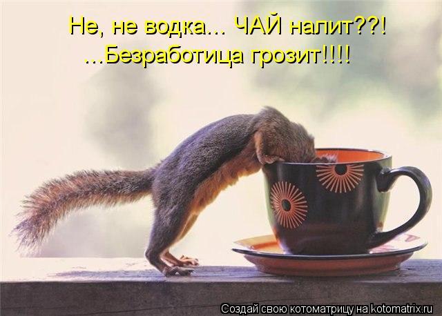 Котоматрица: Не, не водка... ЧАЙ налит??! ...Безработица грозит!!!!