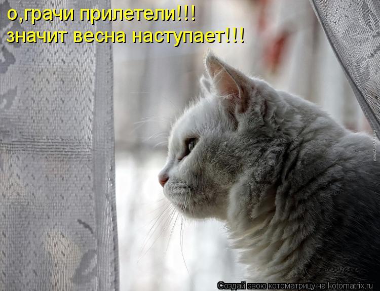 Котоматрица: о,грачи прилетели!!! значит весна наступает!!!