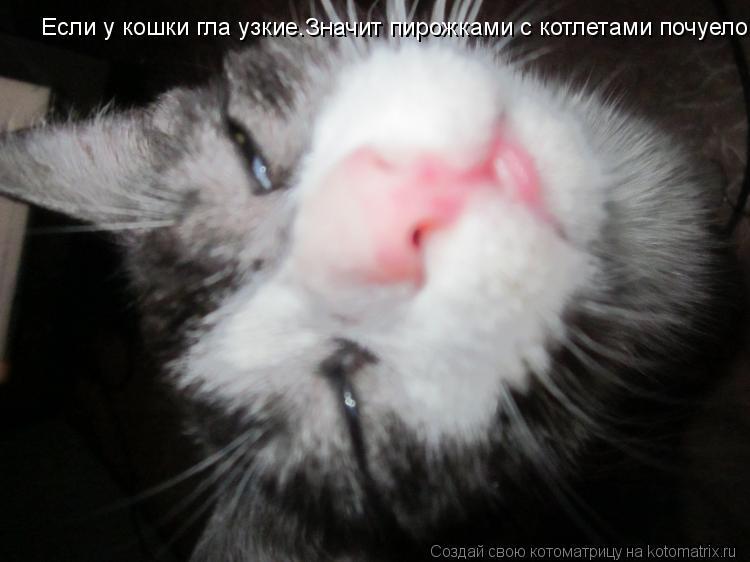 Котоматрица: Если у кошки гла узкие.Значит пирожками с котлетами почуело.