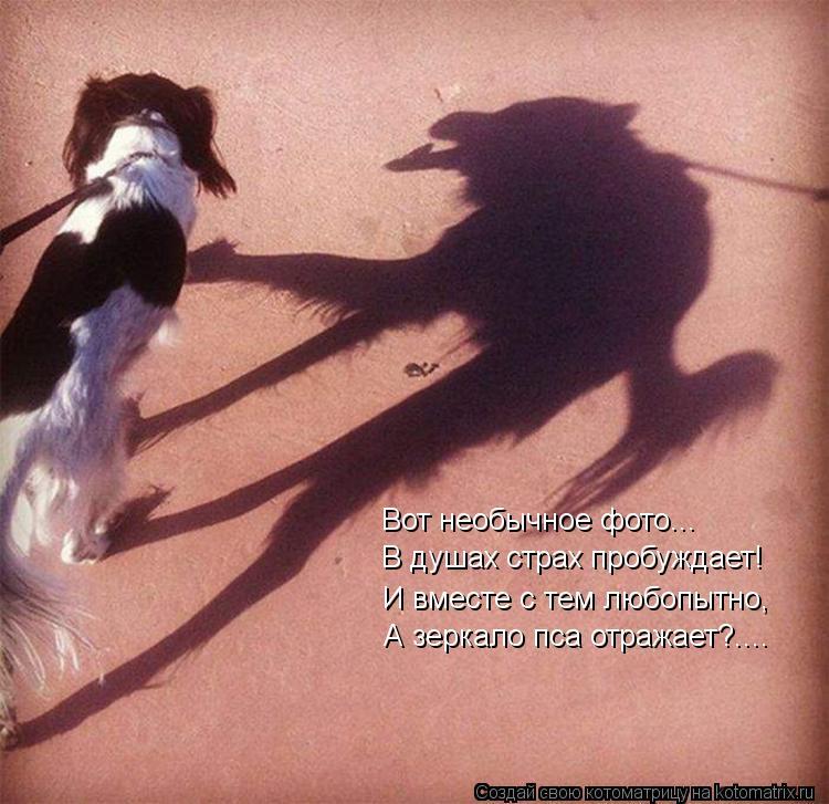 Котоматрица: Вот необычное фото... В душах страх пробуждает! И вместе с тем любопытно, А зеркало пса отражает?....