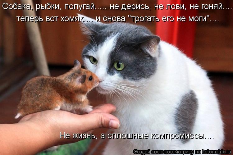 """Котоматрица: Собака, рыбки, попугай..... не дерись, не лови, не гоняй..... Не жизнь, а сплошные компромиссы.... теперь вот хомяк.... и снова """"трогать его не моги""""."""