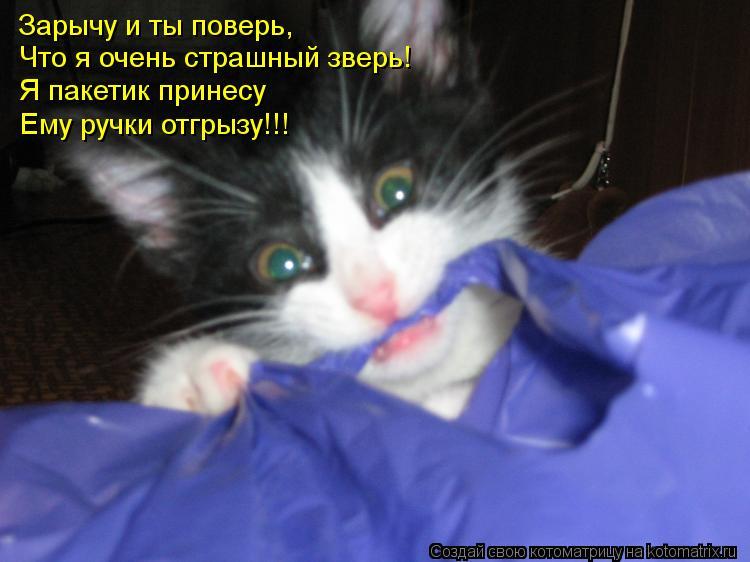 Котоматрица: Зарычу и ты поверь, Что я очень страшный зверь! Я пакетик принесу Ему ручки отгрызу!!!