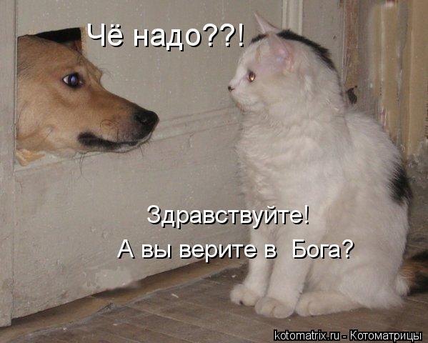 http://kotomatrix.ru/images/lolz/2012/02/29/1125772.jpg