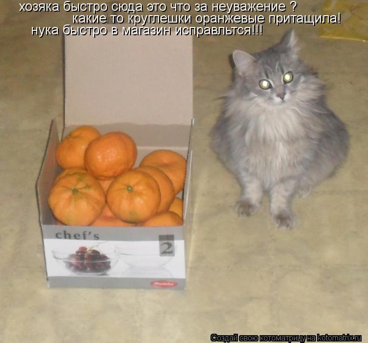 Котоматрица: хозяка быстро сюда это что за неуважение ?  какие то круглешки оранжевые притащила! нука быстро в магазин исправльтся!!!