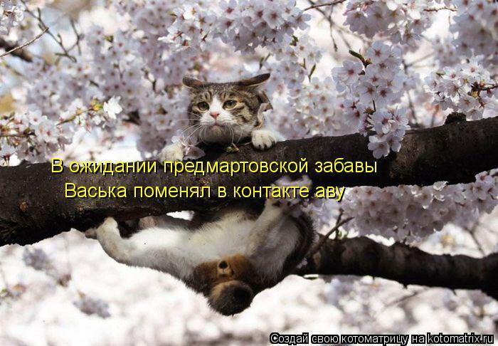 Котоматрица: В ожидании предмартовской забавы Васька поменял в контакте аву