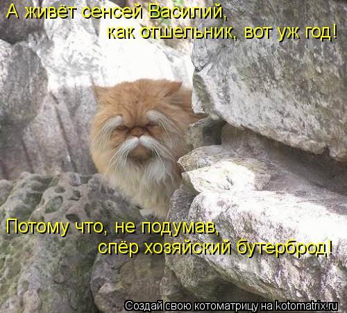 Котоматрица - А живёт сенсей Василий, как отшельник, вот уж год! Потому что, не по