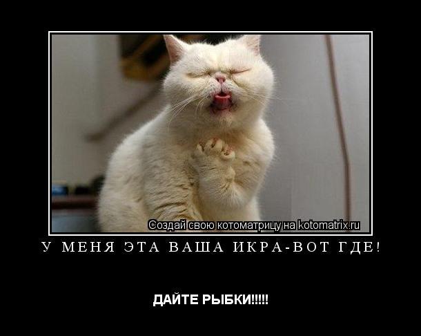 Котоматрица: У МЕНЯ ЭТА ВАША ИКРА-ВОТ ГДЕ! ДАЙТЕ РЫБКИ!!!!!
