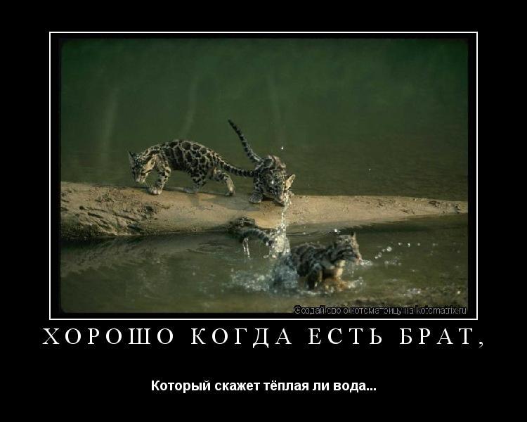 Котоматрица: Хорошо когда есть брат, Который скажет тёплая ли вода...