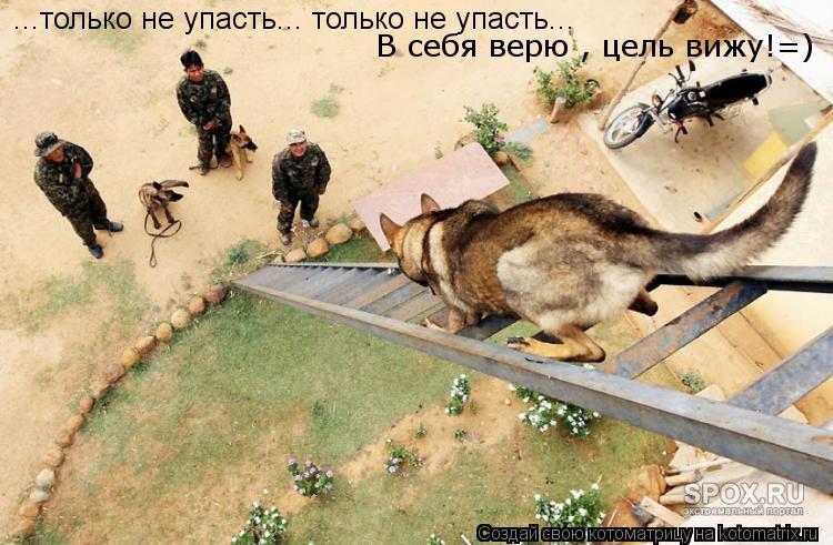 Котоматрица: ...только не упасть... только не упасть...  ...только не упасть... только не упасть...  В себя верю , цель вижу!=)