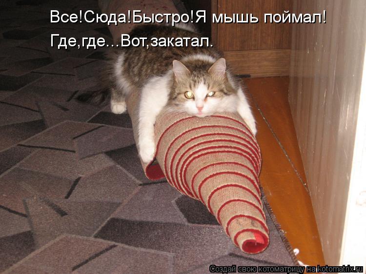 Котоматрица - Все!Сюда!Быстро!Я мышь поймал! Где, где...Вот, закатал.