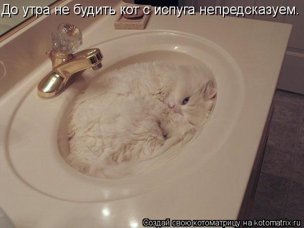 Котоматрица: До утра не будить кот с испуга непредсказуем.