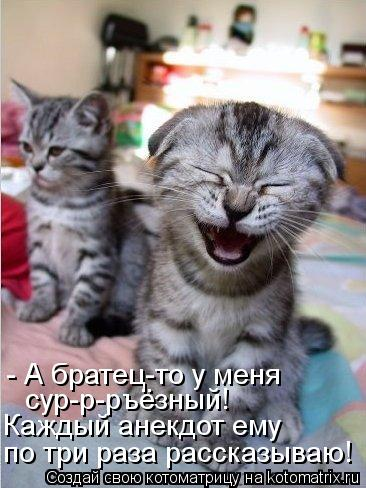 Котоматрица - Каждый анекдот ему  по три раза рассказываю! - А братец-то у меня  сур