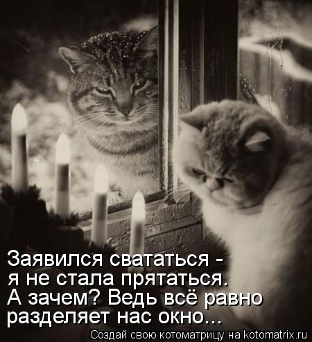 Котоматрица: Заявился свататься -  я не стала прятаться. А зачем? Ведь всё равно разделяет нас окно...