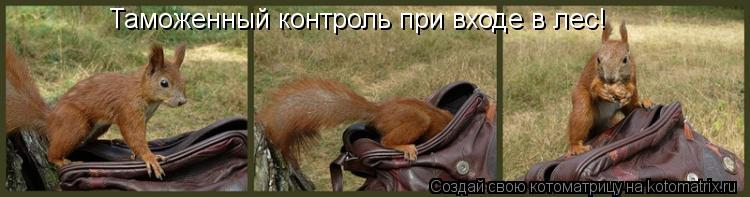 Котоматрица - Таможенный контроль при входе в лес!