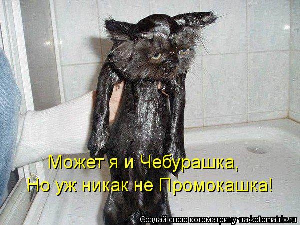 Котоматрица: Может я и Чебурашка, Но уж никак не Промокашка!