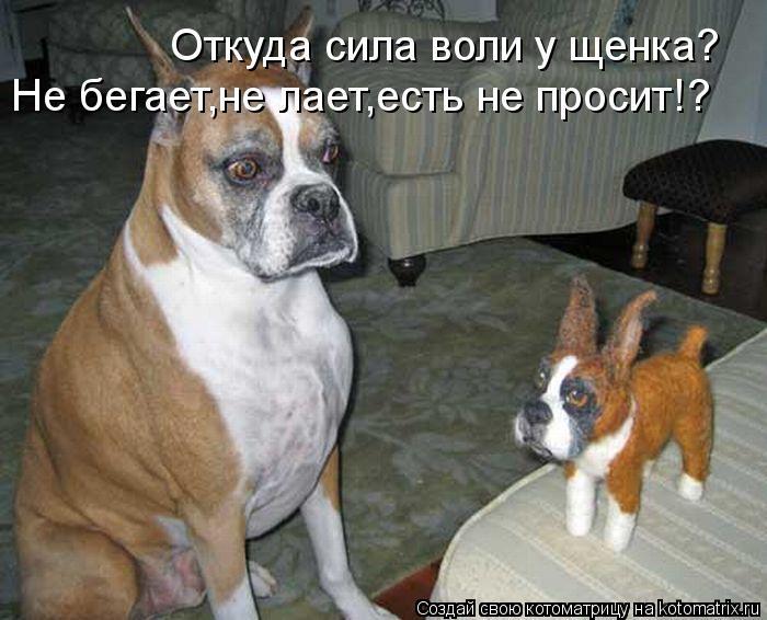 Котоматрица: Откуда сила воли у щенка? Не бегает,не лает,есть не просит!?