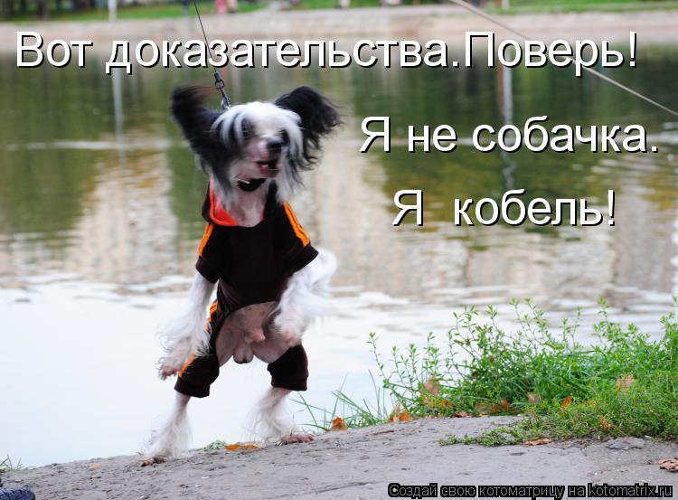 Котоматрица: Вот доказательства.Поверь! Я не собачка. Я  кобель!