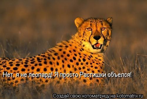Котоматрица: Нет, я не леопард! Я просто Растишки объелся!