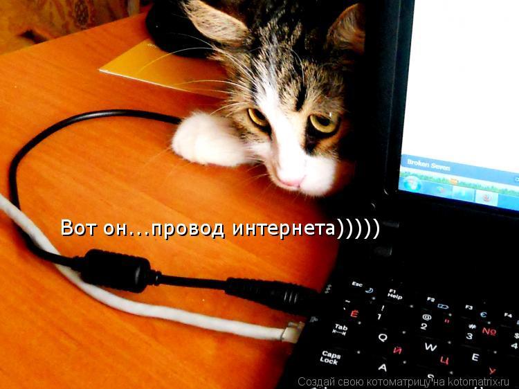 Котоматрица: Вот он...провод интернета)))))