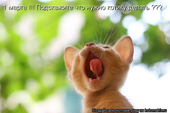 Котоматрица: 1 марта !!! Подскажите что нужно котику делать ???