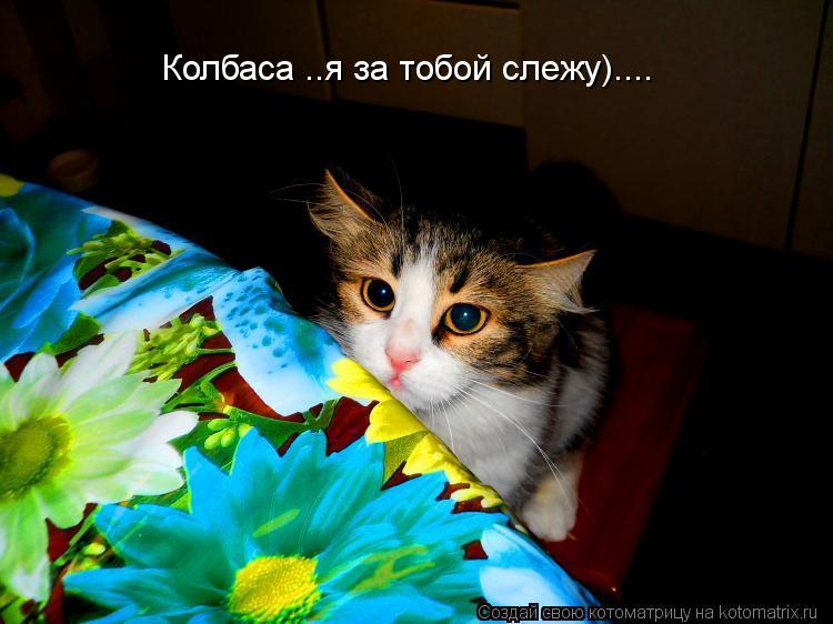 Котоматрица: Колбаса ..я за тобой слежу)....